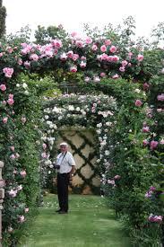 climbing roses ludwigs rosesludwigs roses