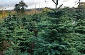 real christmas trees for sale christmas tree centre wreaths christmas trees for sale ireland