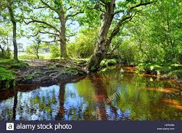 New Hampshire national parks images New forest stream near puttles bridge in the new forest national jpg