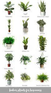 indoor plants that don t need sunlight indoor plants that dont need sun loris decoration