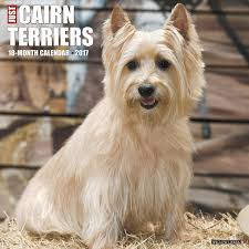 amazon com just cairn terriers 2017 wall calendar dog breed