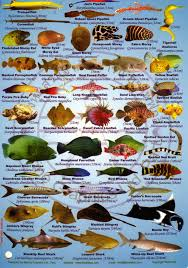 tropical saltwater fish identification