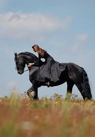 Black Mustang Horse Pictures Best 25 Friesian Ideas On Pinterest Pretty Horses Black Horses