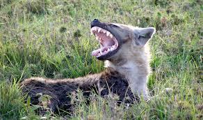 Michigan wildlife images Larger relative brains higher iq msutoday michigan state jpg