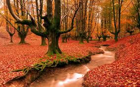 autumn desktop wallpaper download free stunning full hd