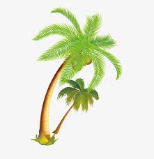 tropical coconut trees tourism coconut trees tropical png and