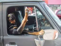 Dog Driving Meme - dogs driving
