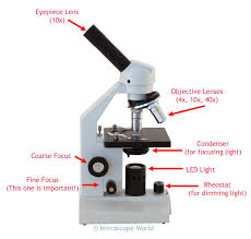 compound light microscope function microscope diagram with labels and definitions light microscopy