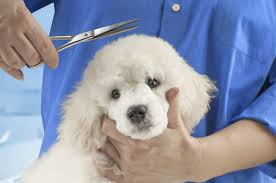 dog grooming pet grooming miami golden paws