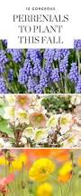 best 25 fall planting ideas on pinterest fall planting