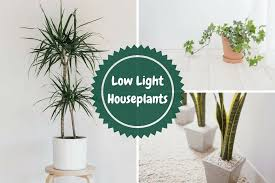 low light houseplants 10 low light houseplants you won t be able to kill