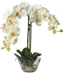 amazon com nearly natural 4643 pp phalaenopsis with glass vase