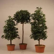 different types of plants and trees artificial olive trees