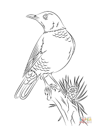 robin bird coloring pages seasonal colouring pages 6592
