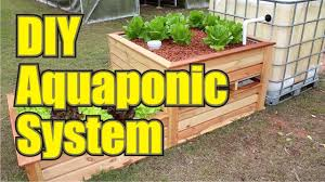 starting your backyard aquaponics system picture with marvellous