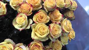Wholesale Roses Tutti Frutti Roses Fresh Wholesale Roses Youtube