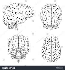 brain anatomy coloring book diagram brain top side front back stock vector 208211470