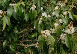 what is native plants fairchild tropical botanic garden u003e horticulture u003e 2014 members