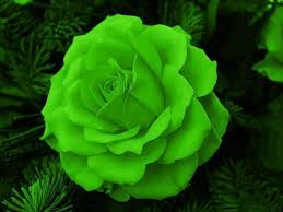 green roses flower wallpapers page 300 bouquet flowers nature flower artfile