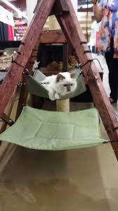 Trixie Cat Hammock by 106 Best Pets Images On Pinterest Cats Pet Products And