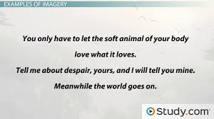 imagery in poetry definition examples u0026 types video u0026 lesson