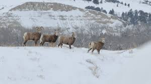 North Dakota national parks images Winter pictures view images of theodore roosevelt national park jpg