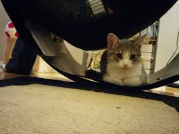 Cat Under Chair Cat Jumps Into The Arms Of A Young Man And Demands To Be Adopted