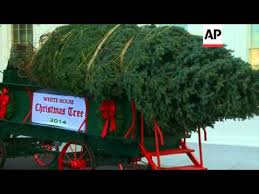 christmas tree delivery obama takes delivery of the white house
