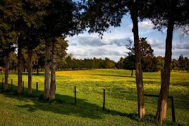 Alabama forest images Free photo trees field pastoral farm alabama forest meadow max pixel jpg