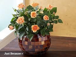 Flower Shops In Albany Oregon - flowers flower delivery fresh flowers online 1 800 flowers com