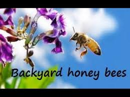 Raising Bees In Backyard by How I Raise Honey Bees In My Backyard Part 1 Spring Opening