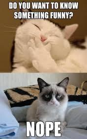 Cat Meme Boat - grumpy cat
