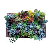succulent wall garden home design ideas and pictures