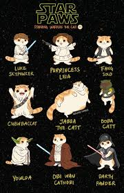 May The 4th Meme - star wars cats may the 4th be with you