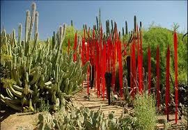 Scottsdale Botanical Gardens Desert Botanical Garden Provides Stunning Near Scottsdale