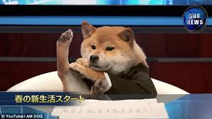 Doge Sex Meme - dog reads the news in japan and becomes internet sensation daily