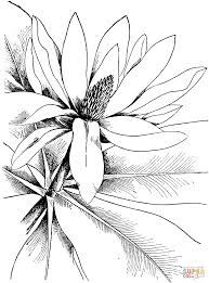 magnolia 4 coloring page free printable coloring pages