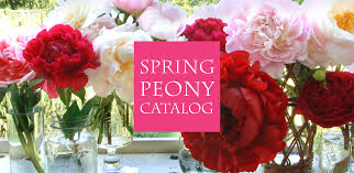 peonies for sale shop peonies peony catalog herbaceous peonies intersectional