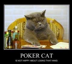 Poker Meme - poker cat meme guy