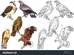 desert eagle bird clipart collection