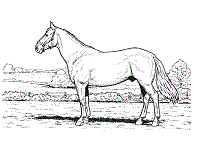 horses coloring pages printable activities 1