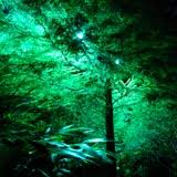 Mercury Vapor Lights Houston Landscape Lighting Design And Installation