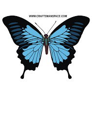 papilio ulysses butterfly vector papilio ulysses butterfly vector