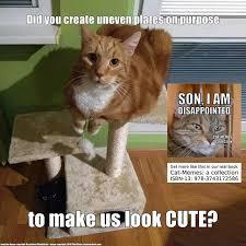 Make Your Own Cat Meme - kittens catsoninstagram kitten instagramcats kitap vacation