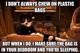 Make Your Own Cat Meme - i love cats memes