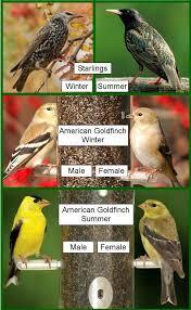 Backyard Wild Birds Wild Birds Unlimited Common Backyard Bird Nest Identification