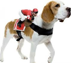 underdog halloween costume dog costume pictures and ideas