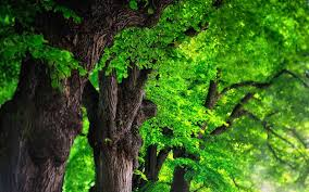 tree background wallpaper 6986339