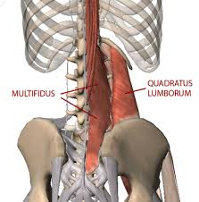 Anatomy Of Human Back Muscles Human Low Back Muscles Anatomy Human Anatomy Chart