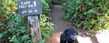 state with most dog owners 2016 tails u0026 trails hiking the coast with a dog travel oregon